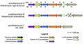 Cyclothiazomycin Gene Cluster.jpg