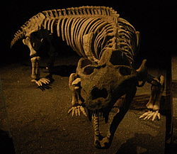 meaning of exaeretodon