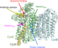 Cytochrome bd CydABX predicted 26335199.png