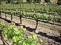 DSC31051, Darioush Winery, Napa Valley, California, USA (5766983158).jpg