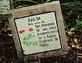 Dahlia coccinea en el jardín botánico.JPG