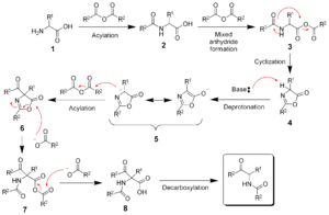 Dakin–West reaction - The mechanism of the Dakin-West reaction