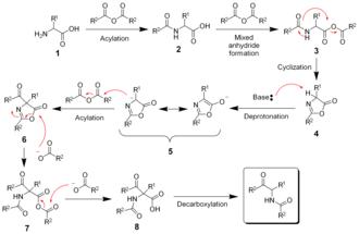 Dakin–West reaction - The mechanism of the Dakin-West reaction