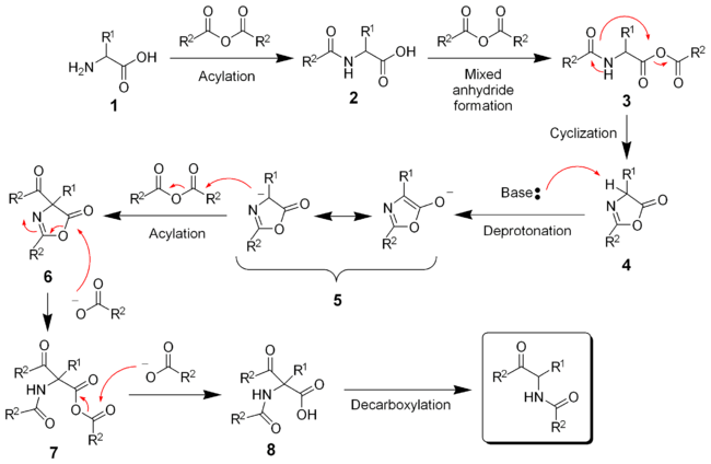 The mechanism of the Dakin-West reaction