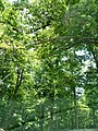 Decker ave to Fire Tower to Grey Run davis farm - panoramio (1).jpg
