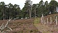 Deer Fence (An Sgòr Dubh) on Mar Lodge Estate (06AUG17) (2).jpg