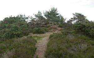Devil's Jumps, Churt - The summit of the easternmost Jump