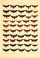 Die Gross-Schmetterlinge der Erde (Taf. 5) BHL9921445.jpg