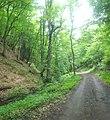 Dilijan National Park, Path way to Aghavnavank 35.jpg