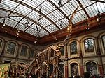 Dinosaurier Berlin naturkunde - 4.jpeg