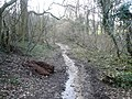 Dividing Path between Cowlishaw Wood (Left) and Carr Plantation (Right) - geograph.org.uk - 357619.jpg