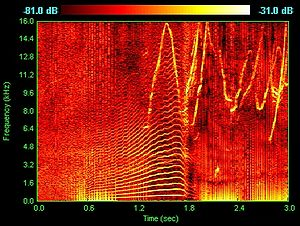 Spectrum - Spectrogram of dolphin vocalizations.