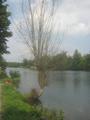 Donauuferbaum23072018.png