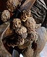 Dracontomelon dao noyau vendu comme amulette.jpg