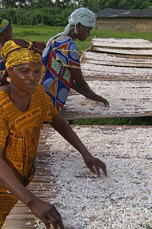 Vegetable chips - Image: Drying cassava chips DRC