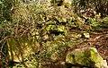 Drystone wall, Killynether Wood (3) - geograph.org.uk - 749004.jpg
