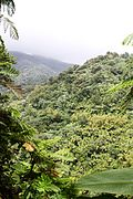 El Yunque nat park PR IMG 2128.JPG