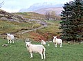 End of the road, Blarnalearoch, Loch Broom - geograph.org.uk - 619333.jpg