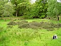 Epping Forest clearing with heather - geograph.org.uk - 1570101.jpg