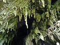 Estalactitas en la entrada de la cueva de El Guácharo.jpg