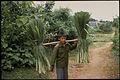 Farming, Vietnam 2007. Photo- Paul Kelly - AusAID (10695062843).jpg