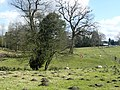 Farming in the Forest - geograph.org.uk - 745110.jpg