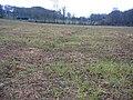 Farmland, Broadmayne, Dorset - geograph.org.uk - 52316.jpg