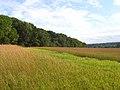 Farmland, Donnington - geograph.org.uk - 936840.jpg