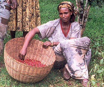 A coffee farmer with a basket of coffee beans in Ethiopia.