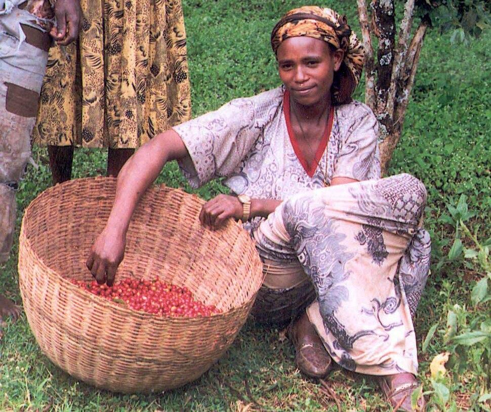 Female coffee farmer in Ethiopia (5762538117)