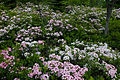 Field-spring-flowers - West Virginia - ForestWander.jpg