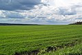 Fields near Novogorbovo village - Moscow region, Russia - panoramio.jpg