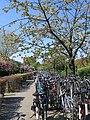 Fietsenstalling Station Overvecht met bloeiende bomen, Utrecht, 2019.jpg
