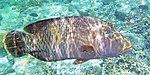 Fish 8 (30909116231).jpg