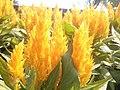Fleurs à la fontaine du parlement - panoramio (1).jpg
