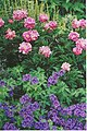 Floral Beauties of the Botanic Gardens - geograph.org.uk - 110490.jpg