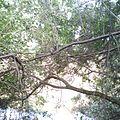 Floresta s carlos.jpg