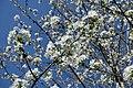 Flower @ Jardin Pierre Adrien Dalpayrat @ Paris (33491085792).jpg
