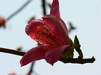 Flower emblem of Guangzhou & Kaohsiung (425558199).jpg