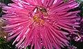 Flowers, bee.jpg