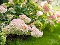 Flowers (9665933753).jpg