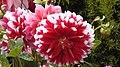 Flowers .6.jpg