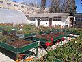Flowers in school garden, botanical garden, Jerusalem, Israel (4).jpg