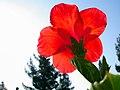 Flowers of Iran گلهای ایران 15.jpg