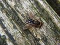 Fly sbt cb001.jpg