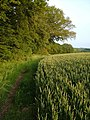 Footpath alongside wheat field near Dotton - geograph.org.uk - 189333.jpg