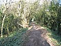 Footpath between Rope Walk and The Mill - geograph.org.uk - 1058066.jpg