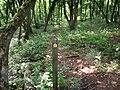 Footpath through the woods - geograph.org.uk - 2490294.jpg
