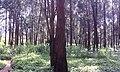 Forêt urbaine yaoundé.jpg