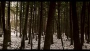 File:Forest For the Trees 4K.webm